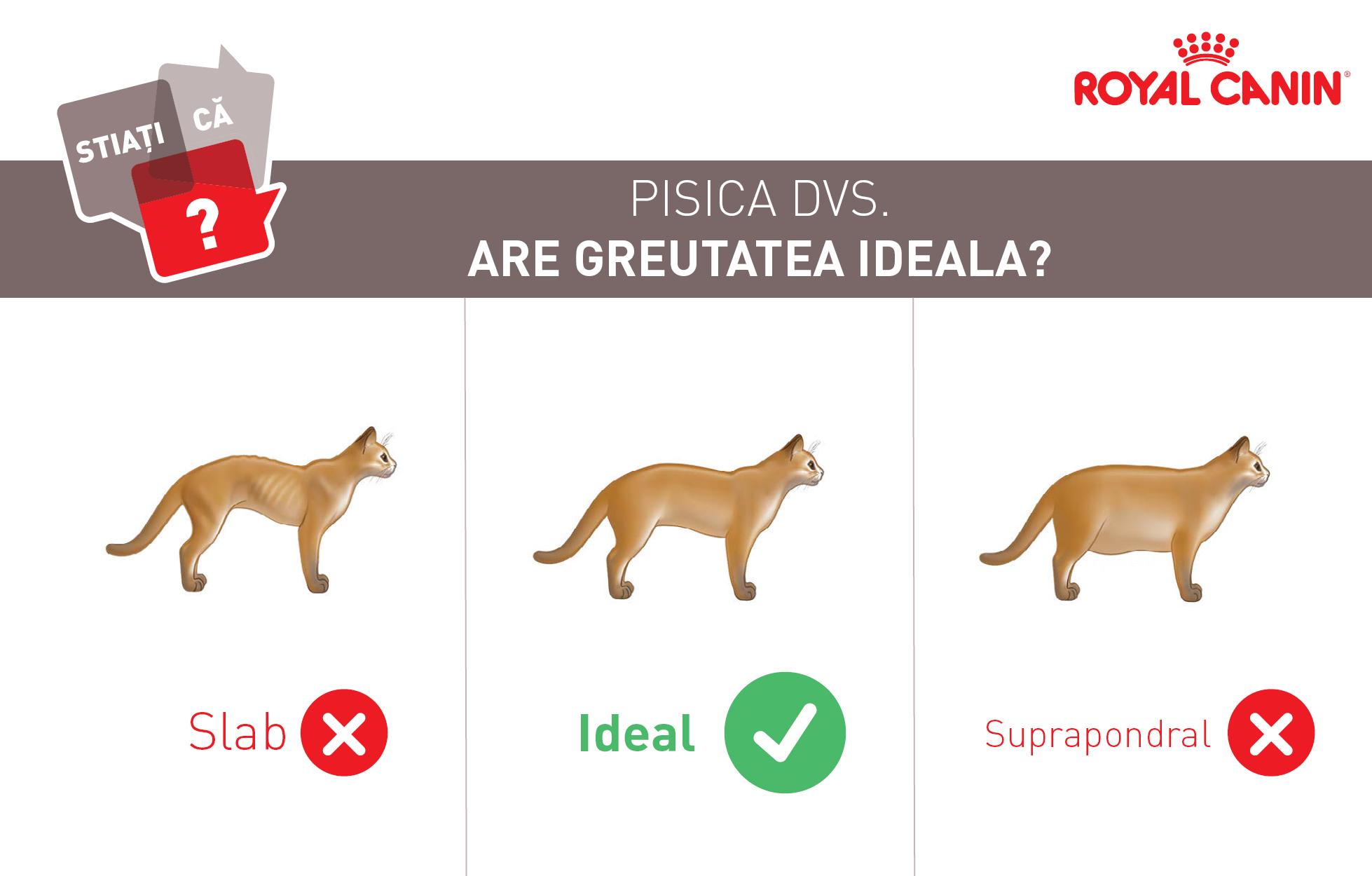 Greutate ideala_Pisica